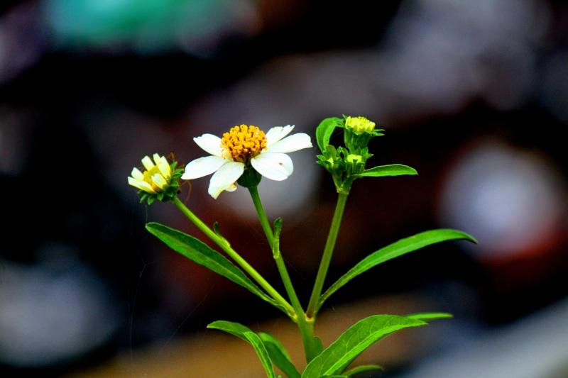 ดอกไม้ชุดใหม่ Img_1225