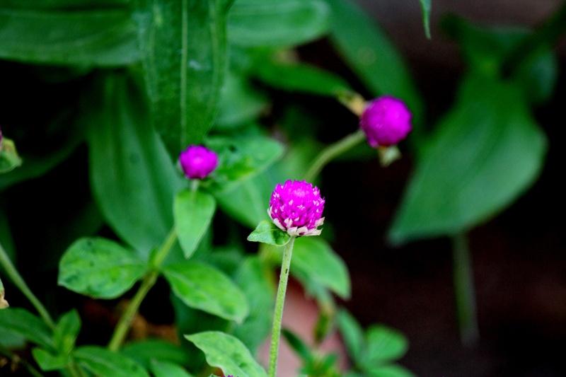 ดอกไม้ชุดใหม่ Img_1226
