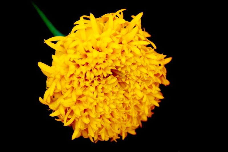 ดอกไม้ชุดใหม่ Img_1227