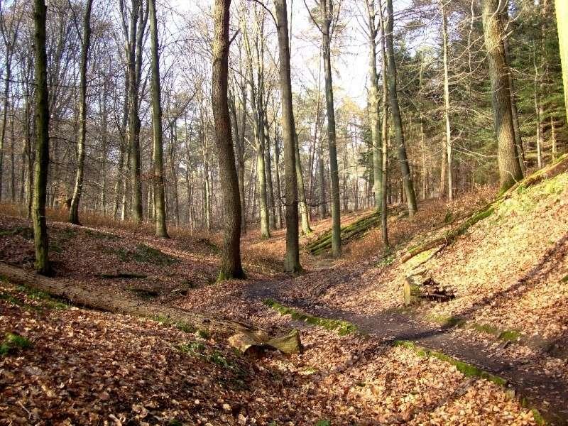 Forêt de Soignes 00010