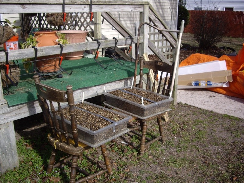 I'm making progress and gardens Chair_11