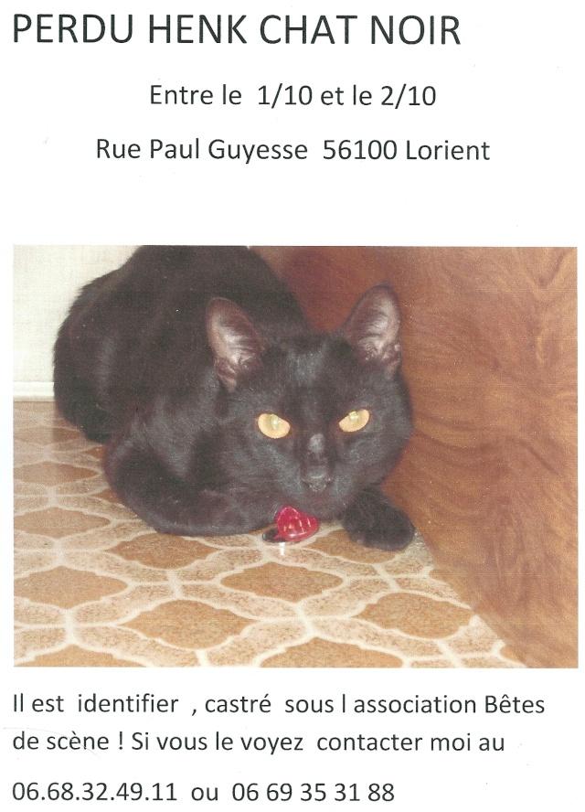 sos!!perdu HENK chat noir de BDS  sur lorient (56) Numari10