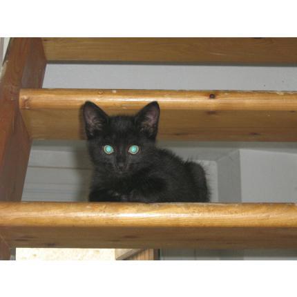 perdu chaton noir 98311_10