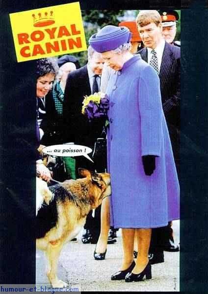 des femmes qui ont de l'humour - Page 2 Royal-10