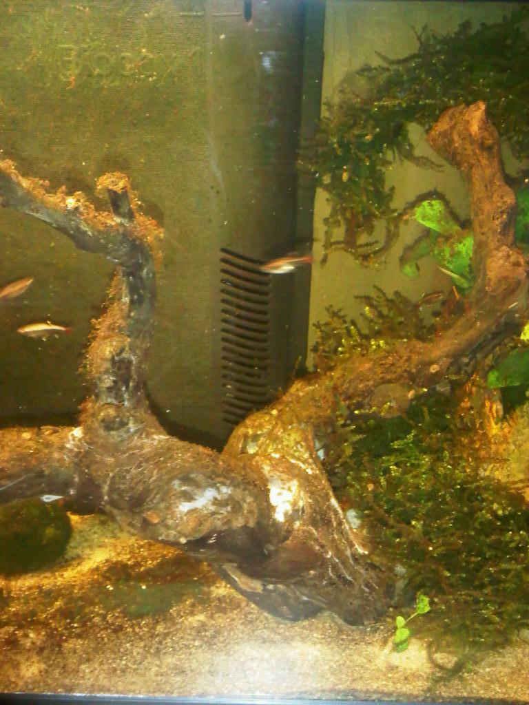Aspiration fatale des petites crevettes... Biobox10