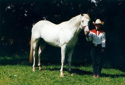 Elevage de Quarter Horse dans le Nord Pas de Calais 17170610