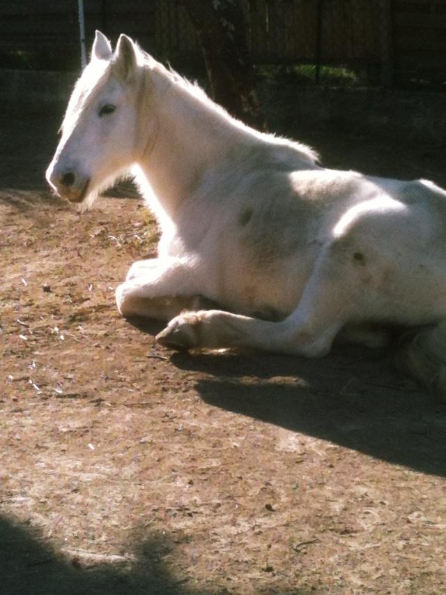 Thème de Mai 2013 : Le Cheval en pleine sieste!! An201210