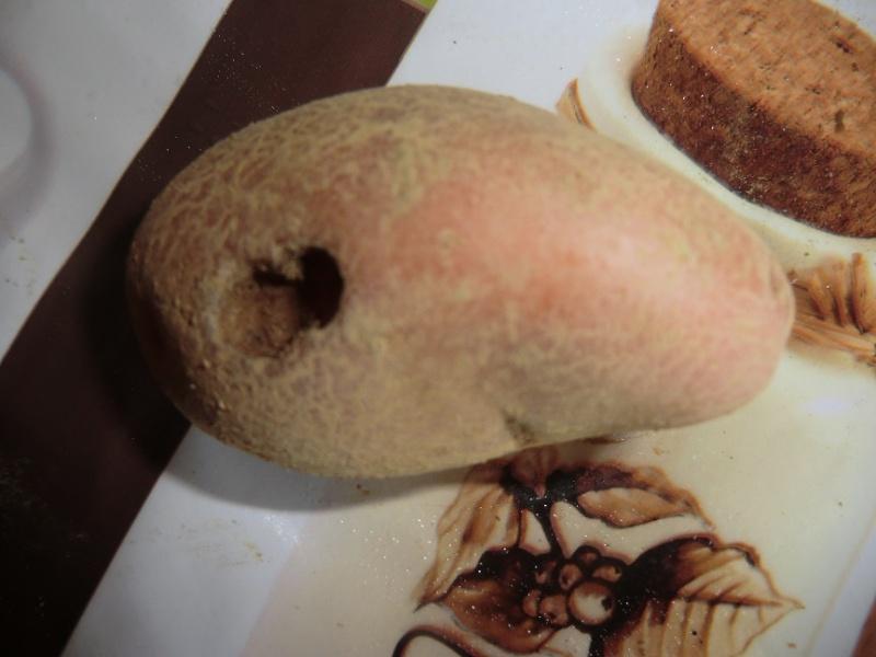 Evolution des cultures de pommes de terre 2013 - Page 13 Cimg1111