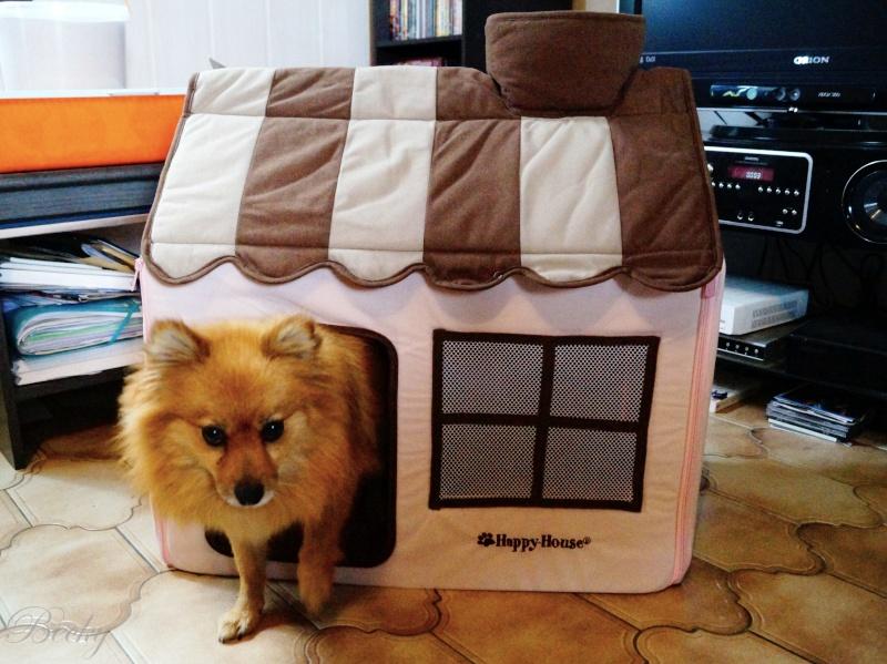 Maison pour chien Dsc08210