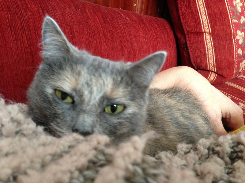 Midsy ma petite merveille - Page 2 Img_2926