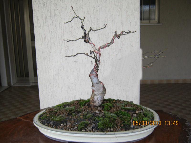 La mia piccola quercia antica. Querci10