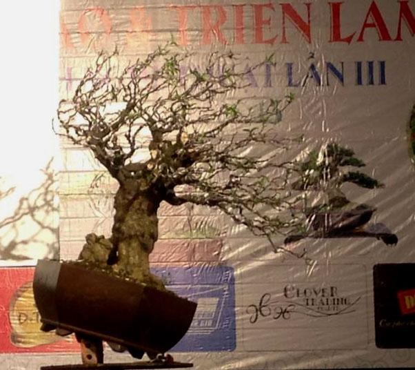 Vietnam International bonsai show 10035310