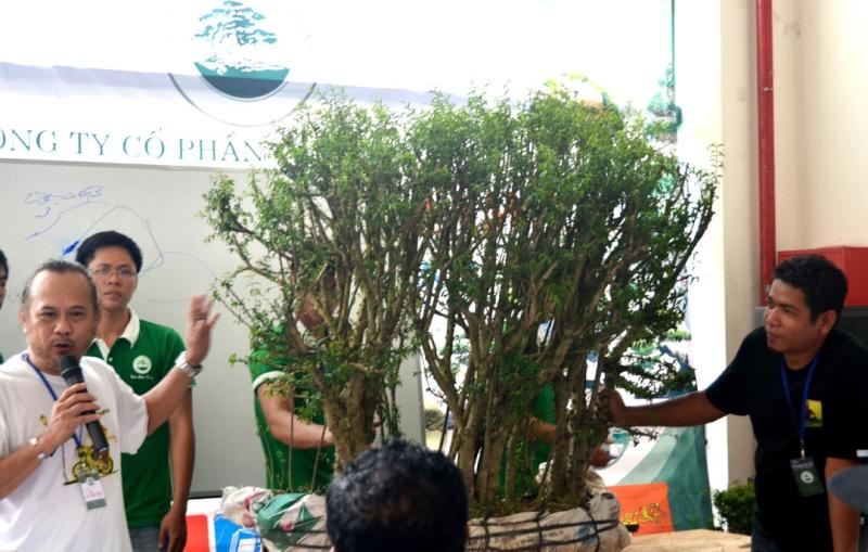 Vietnam International bonsai show Dsc_4910