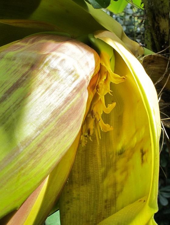 J'ai la banane... 05414