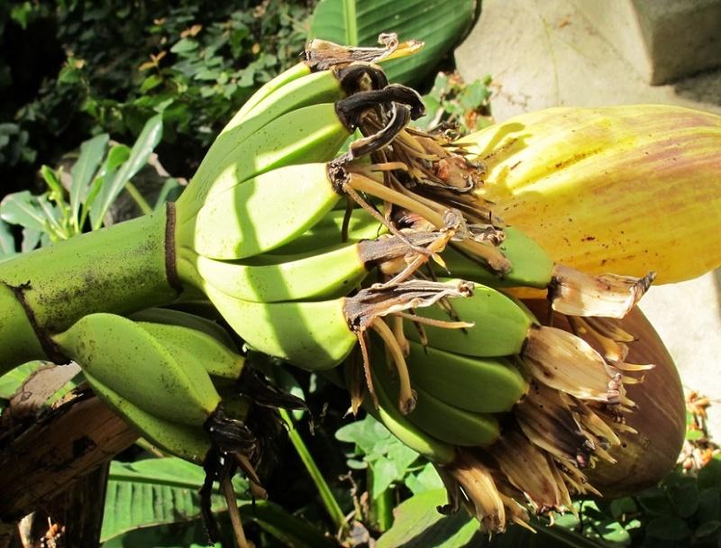 J'ai la banane... 05712
