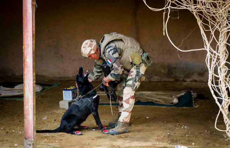 Animaux soldats - Page 2 124