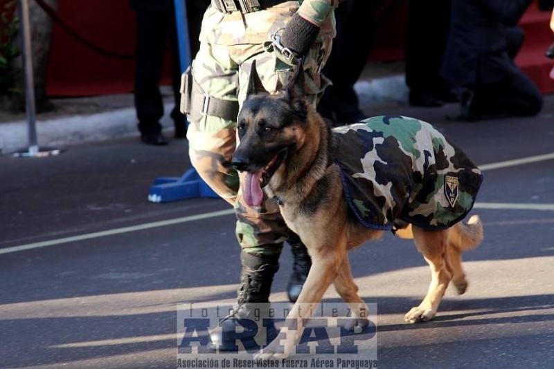 Armée paraguayenne 1a4210