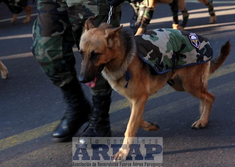 Armée paraguayenne 1a4410