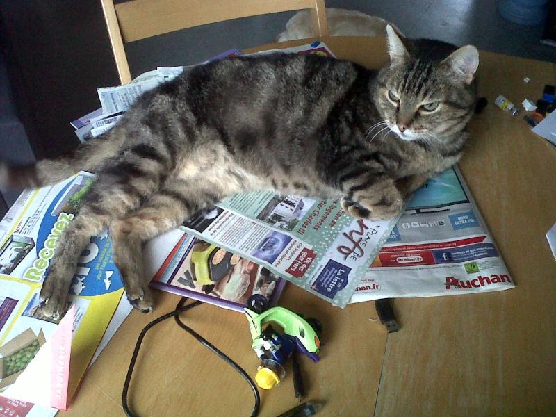 Basil,matou tigré environ 8ans, FeLV+, Adorable ++++ (54) Basil_10