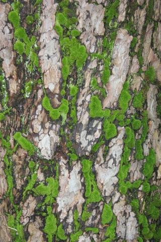 mousses et lichens [verrouillé] - Page 2 Img_2513