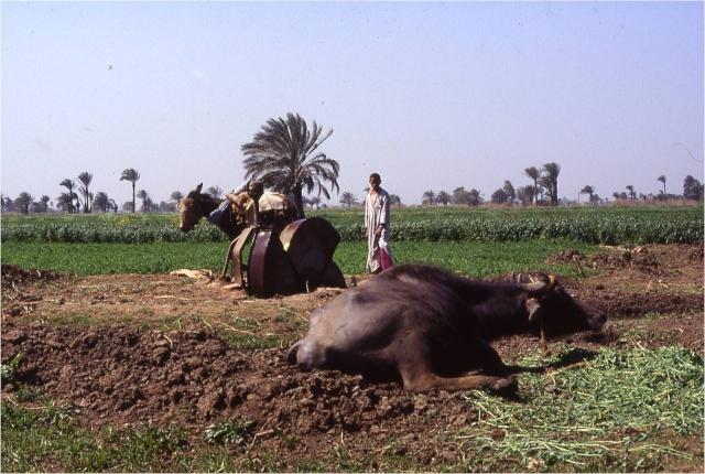 ~~Historia Antigua~~ Egipto: El medio geográfico Image127