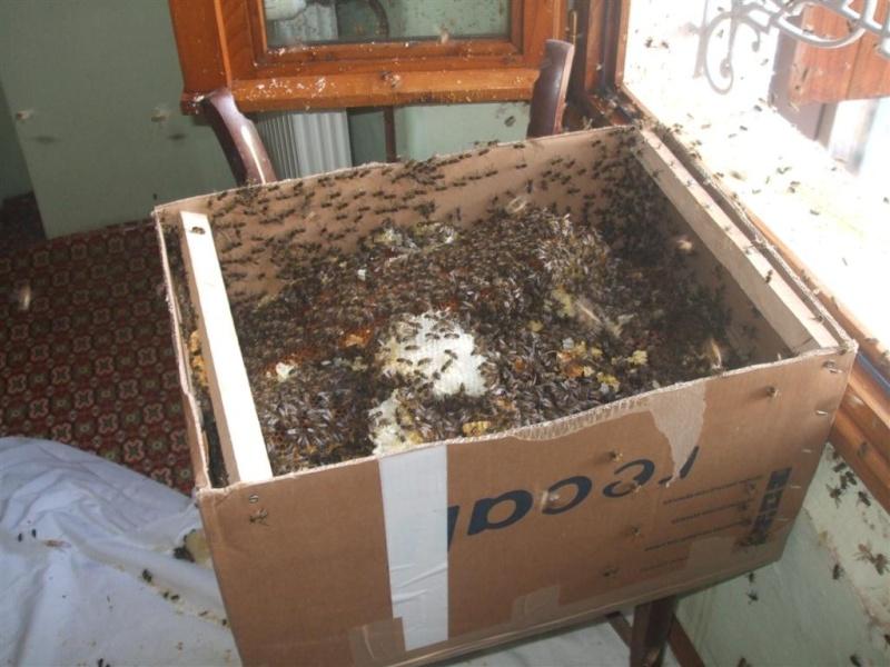 """combien de ruches """"en réserve"""" Dscf5212"""