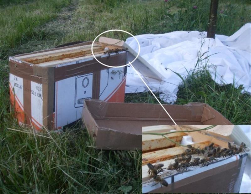 """combien de ruches """"en réserve"""" Ruchet10"""