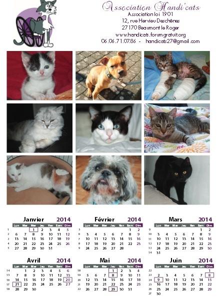 Calendriers 2014 de l'association Handi'cats Dafini12