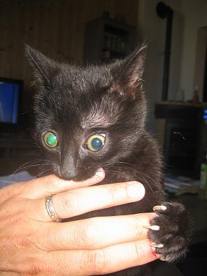 HELP chaton aveugle sera mort dimanche Img_4810
