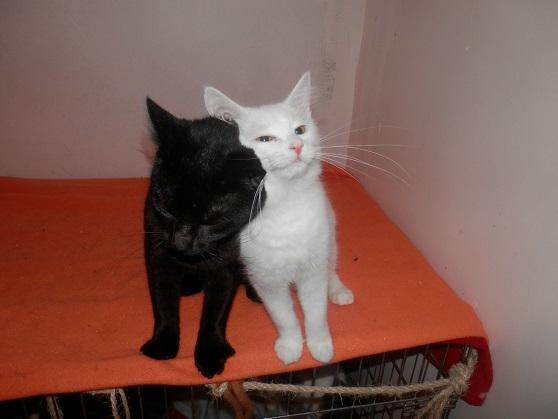 Black and White P9123432