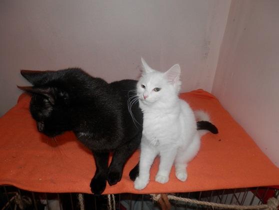 Black and White P9123433