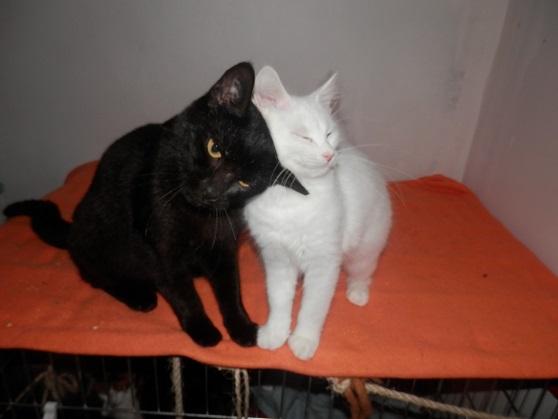 Black and White P9123436