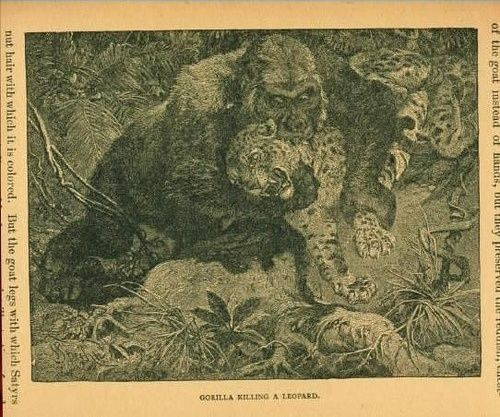 GORILLA X LEOPARD - COMPARATIVE ANALYSIS AND RESULTS 1610