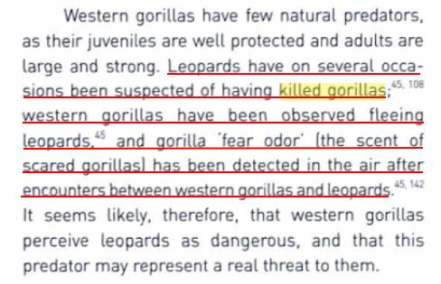 GORILLA X LEOPARD - COMPARATIVE ANALYSIS AND RESULTS 1810