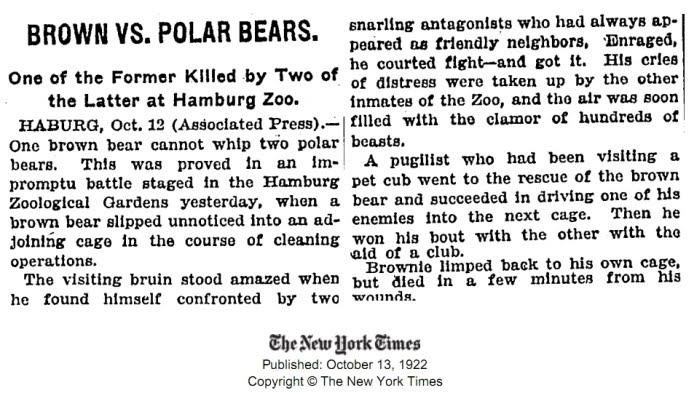 Urso pardo vs Urso polar Polar10