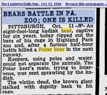 Urso pardo vs Urso polar Pqaaag10