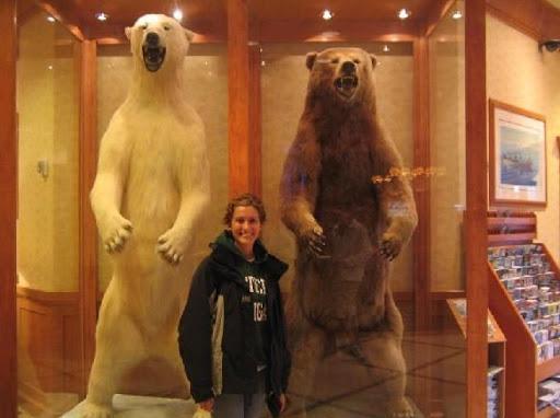 Urso pardo vs Urso polar Ursos_10