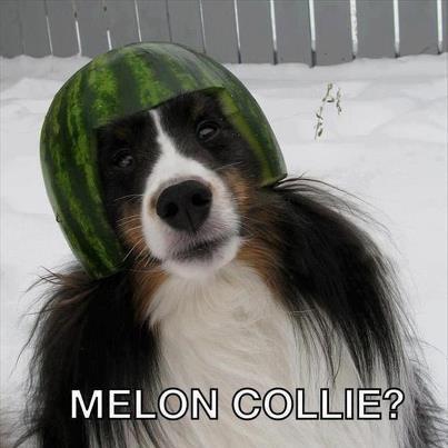 Melon Collie  Melon_10