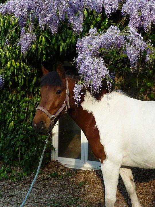 Les chevaux Dorélia  22410110