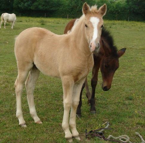 Les chevaux Dorélia  Dsc04910