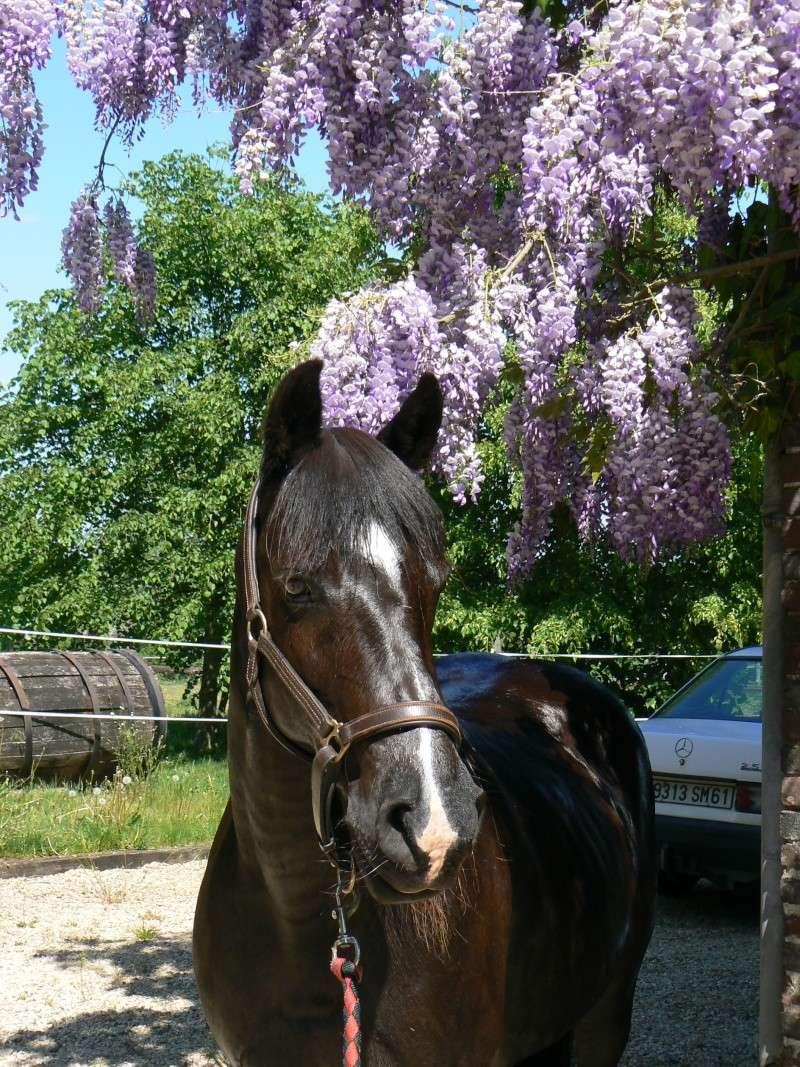 Les chevaux Dorélia  P1040110