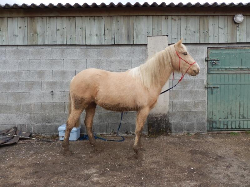 Les chevaux Dorélia  P2070110