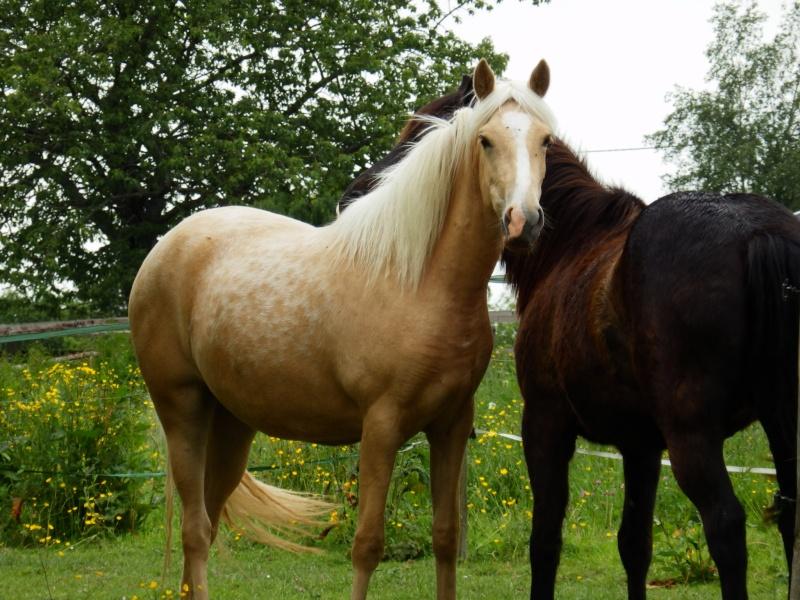 Les chevaux Dorélia  P5270010