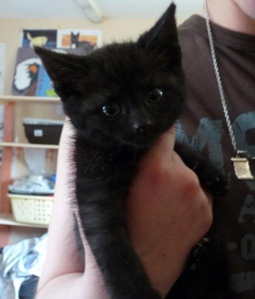 Illico mâle noir, né en mai 2013 vagabond Illico10