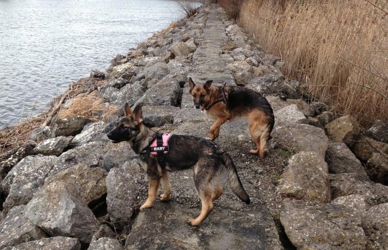 Vos chiens et leurs harnais! Photo  - Page 2 Image10
