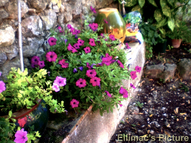 Ellimac's Picture ♥ (c) P6221118