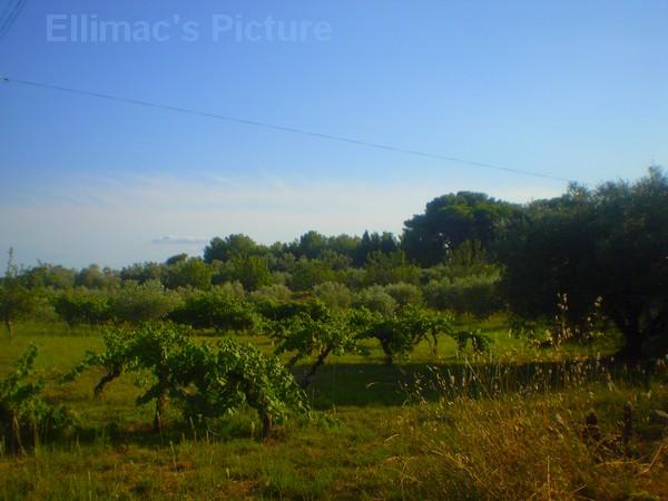 Ellimac's Picture ♥ (c) P6221124