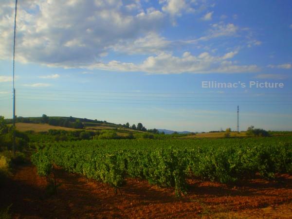 Ellimac's Picture ♥ (c) P6221135