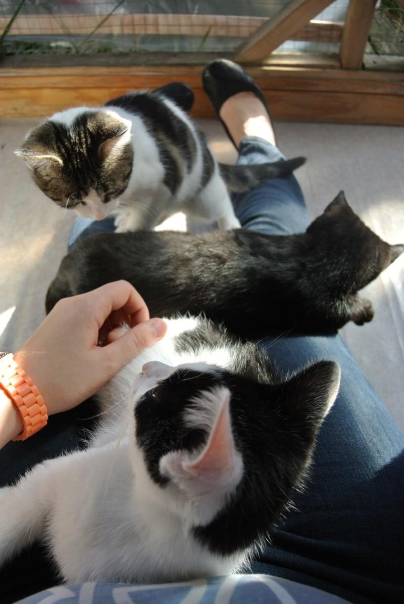 La face cachée de l'Ecole du chat de Quiberon - Page 5 3_terr10