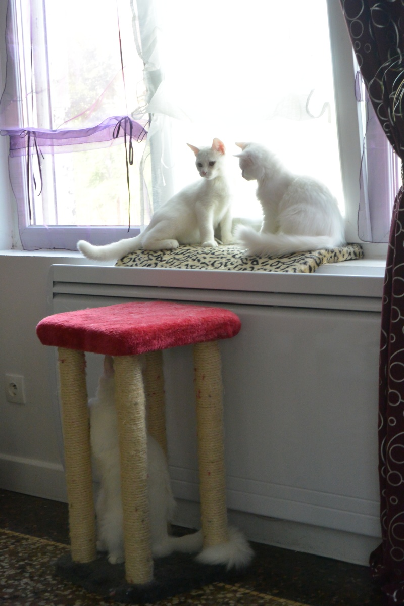 Photos des chats sauvés, avant/après - Page 2 Dsc_0410